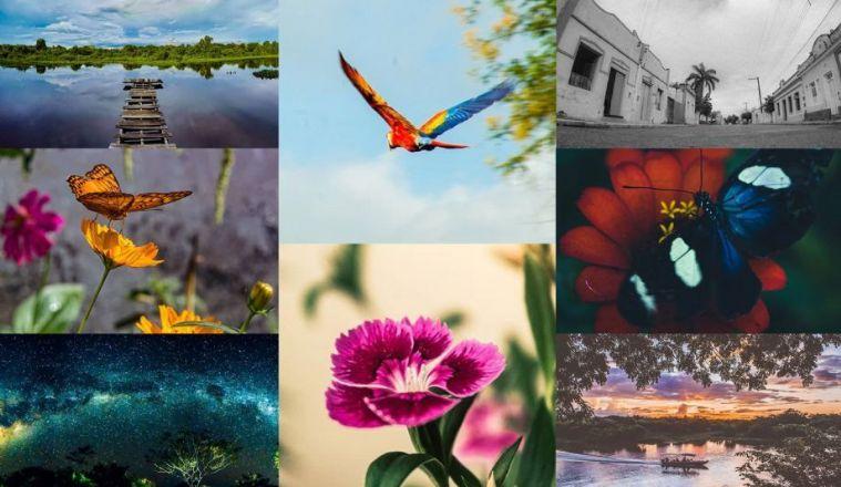 Com olhar apurado ao Pantanal, cacerense revela detalhes da natureza em fotografias