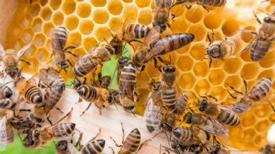 Agricultura: Kuwait abre mercado para mel do Brasil