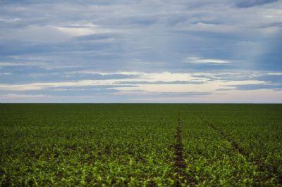 Conab informa que 69,5% da área de soja foi semeada até a 2ª semana de novembro