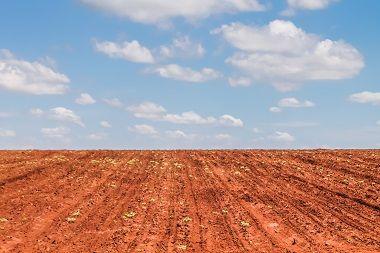 Produtor rural é condenado por impedir regeneração de vegetação