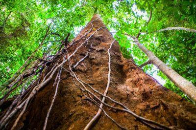 Preservação em áreas rurais é 108% maior que nas áreas de conservação e terras indígenas