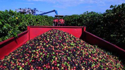 Café/Conab: 3ª estimativa para safra é de 49 milhões de sacas
