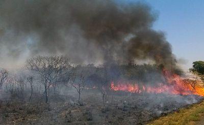 Sitiante terá que reflorestar área amazônica e pagar multa de R$ 20 mil por causar desmatamento