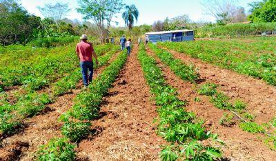 Ministra assina convênio para ampliar assistência técnica a pequenos agricultores