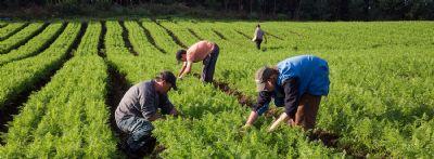 Recursos do Pronaf já estão disponíveis em Mato Grosso