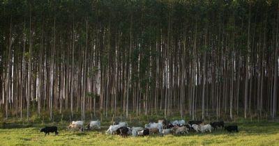 Projeto ABC Cerrado recupera de 93 mil hectares de áreas degradadas