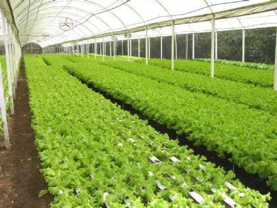 Empaer realiza capacitação online sobre as potencialidades do cultivo hidropônico