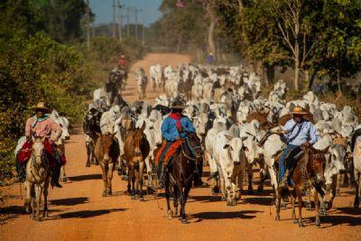 Estado cria de grupo de trabalho para ações de recuperação do setor pecuário do Pantanal