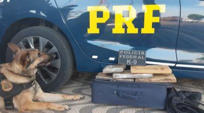 Cão farejador encontrado maconha em bagagem; rapaz é preso