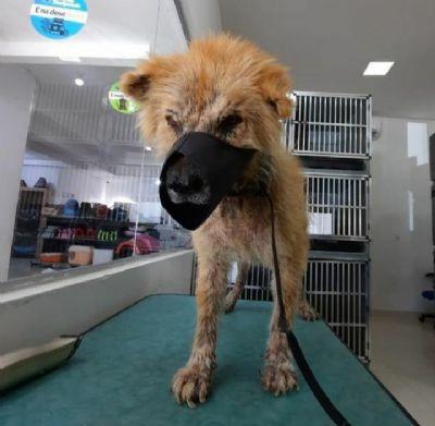 Projeto Lunaar pede ajuda no tratamento de cadela da raça Chow Chow abandonada