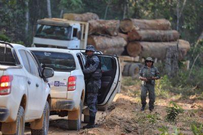 Dez municípios mais desmatadores são alvo da operação Amazônia