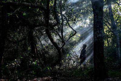 Desmatamento em Mato Grosso cai 22% em setembro