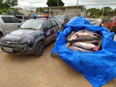 Polícia apreende quase meia tonelada de peixe e dois são detidos; vídeo