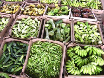 Projeto da Empaer estimula economia local com produção de frutas, legumes e verduras