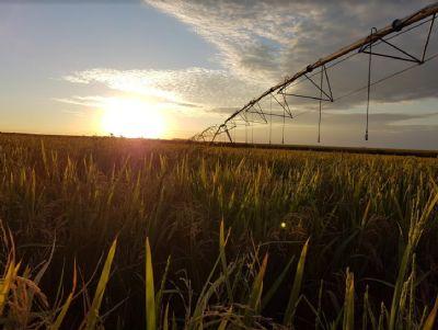 Lavouras irrigadas são sinônimo de produtividade e sustentabilidade