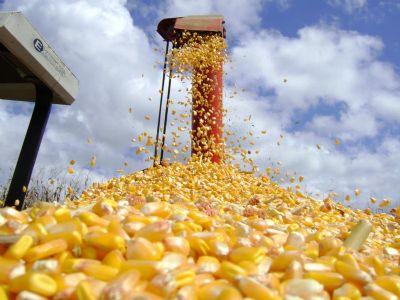 Custo da produção de milho em Mato Grosso aumentou 11% nesta safra