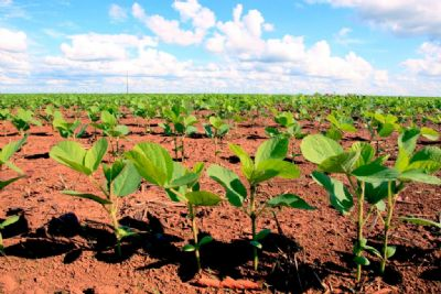 Com 39,6% de atraso, plantio da soja alcança 24,8% das regiões produtoras do Estado