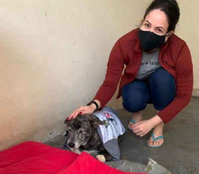 Policiais mobilizam doações para custear internação da cadela que caiu de viaduto
