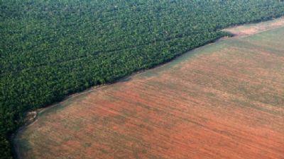 Estudo da Embrapa aponta que soja não representa risco de desmatamento para a Amazônia