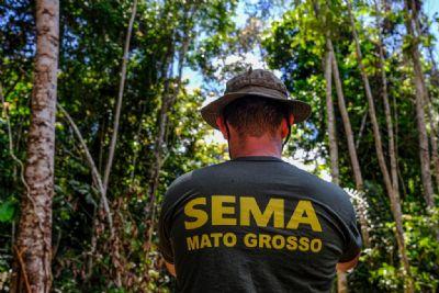 MT apresenta redução de 31,5% nos alertas de desmatamento