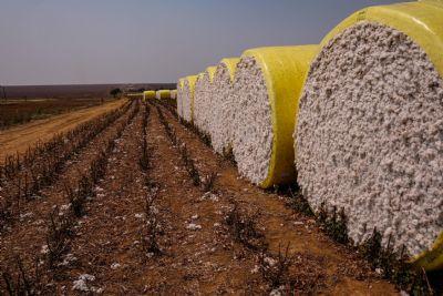 Mato Grosso amplia liderança no ranking da produção agrícola brasileira