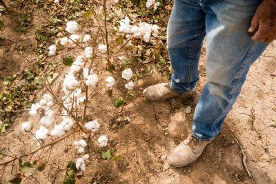 Garantia-Safra: agricultor pode consultar benefício pela internet