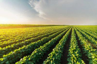 Ministra busca investimentos nos Emirados Árabes para melhorar logística para agro no Brasil