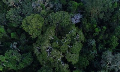 Governo autoriza apoio da Força Nacional ao ICMBio na Amazônia