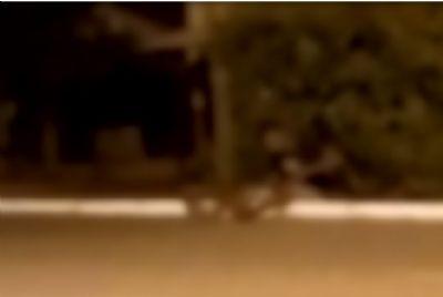 Homem beija boca de gato no interior de MT - vídeo