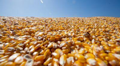 Exportação de milho reduzirá oferta interna e setor terá dificuldade de compra