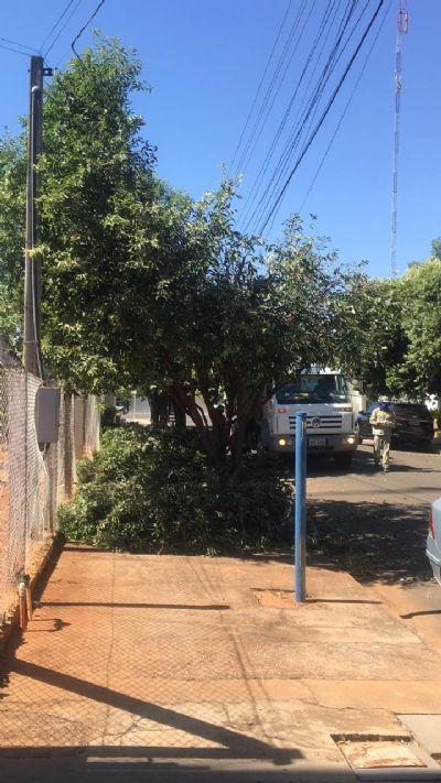 Energisa esclarece sobre o trabalho das podas de árvores que está sendo feito em Sorriso
