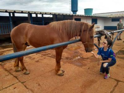 Jair Bolsonaro aprova lei que regulamenta a terapia com cavalos