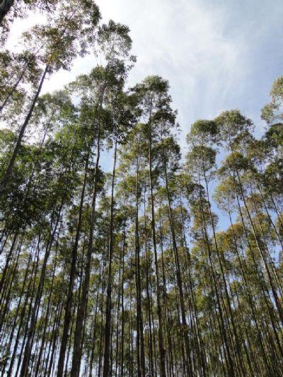 Aprovado Plano Nacional de Florestas Plantadas para fortalecer o segmento no Brasil
