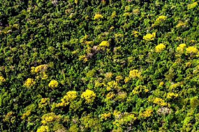 Nova Lei estadual incentiva plantio de espécies nativas em áreas desmatadas