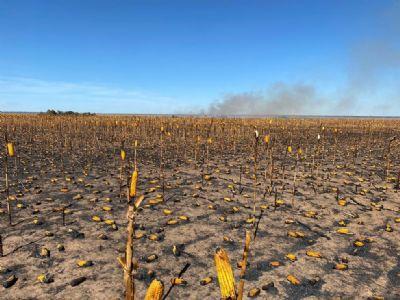 Campanha orienta produtores para reduzir riscos de incêndio durante colheita do milho