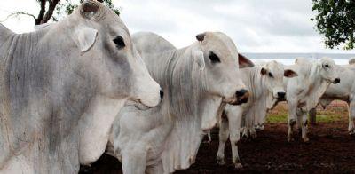 Imea aponta queda de 7% na estimativa de confinamento de gado em MT