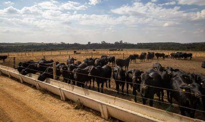 Abate de bovinos no primeiro trimestre tem menor nível desde 2009