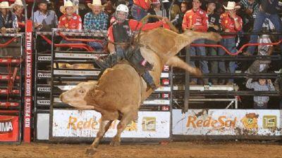 Montaria de touro em Barretos completa 40 anos com polêmicas e prêmio de até R$ 280 mil