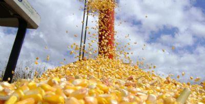 Valorização do câmbio aumenta custo de produção do milho em MT