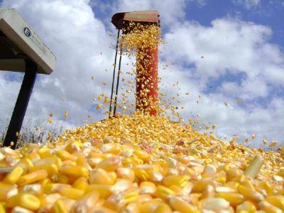 Milho em Mato Grosso tem alta de 1,45%