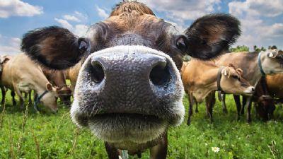 Setor prevê bons resultados com exportação de sêmen bovino em 2019