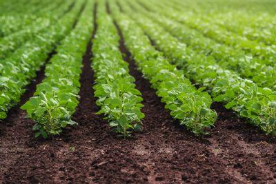 Falta de chuva não ameaça produtores no plantio da soja