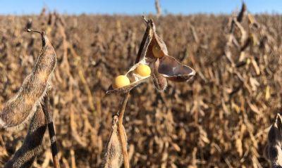 Suspensão de tarifa de importação de soja e milho deve reduzir custo ao produtor, diz presidente da Abraleite
