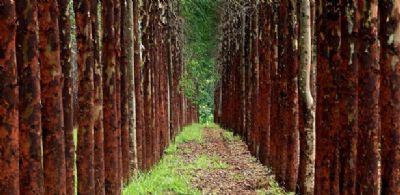 Florestas plantadas geraram 4,2 bi de toneladas de gás carbônico em 2018