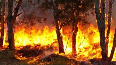 Senado pede para governo incluir Pantanal no combate às queimadas