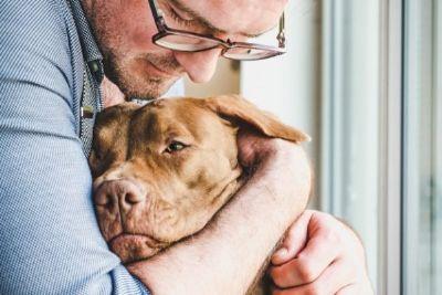 Acidentes domésticos: veja o passo a passo dos primeiros socorros aos pets