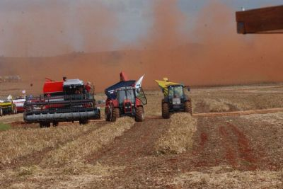 IBGE estima queda de 1% na safra de grãos em 2020