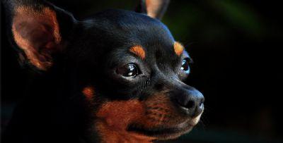 Mulher surta e mata cachorro com mangueira de água na boca; olhos do animal ficaram expostos