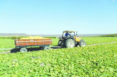 Setor agropecuário fatura 8,9% a menos com exportações em junho