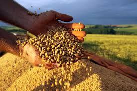 Brasil continuará fornecendo soja à China e pode retomar outros mercados